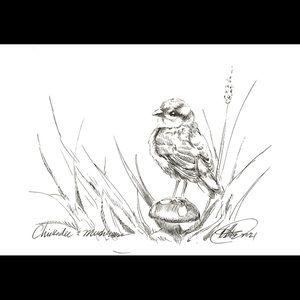 Original art chickadee bird mushroom ink sketch